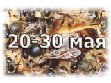 4-х рамочные пчелопакеты (Дадан, Карника) РБ